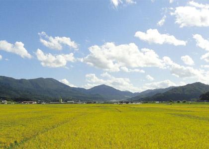 与謝野町の米